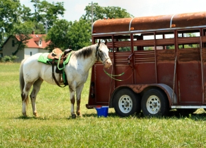 Horse and Horse Trailer